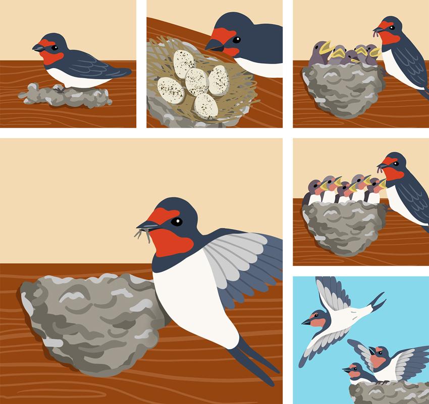 illustrations for 'EDIT'
